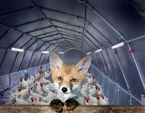 fox guarding the hen house